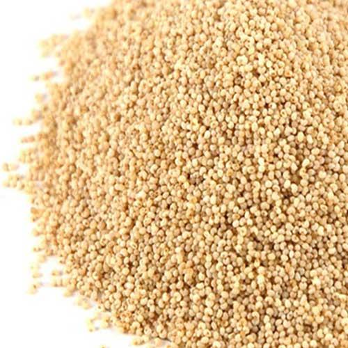 Kasa kasa Poppy Seeds (கசகசா)