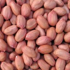 Raw Ground Nut Peanuts Verkadalai (வேர்கடலை)